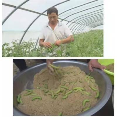 加宽结实的纱网豆虫养殖棚大网片结实抗老化耐晒