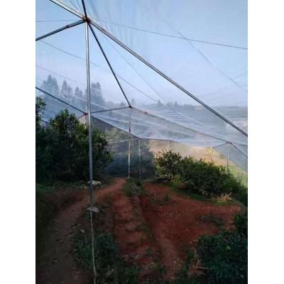 茂伦果树防虫网全新料耐晒大棚防虫网抗老化防虫网厂家