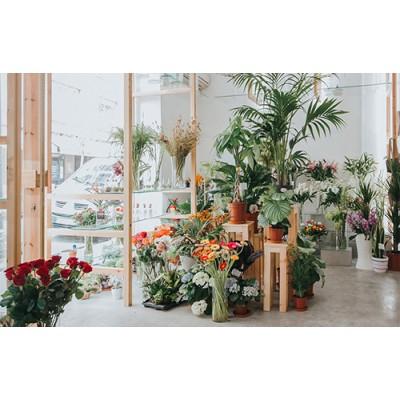 合肥花店装修要点,网红花店这样设计,让你的梦想照进现实
