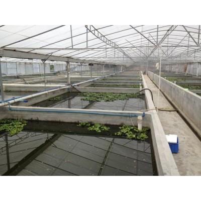 河北水产养殖大棚图片
