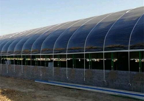 河北建设肉鸡养殖温室大棚