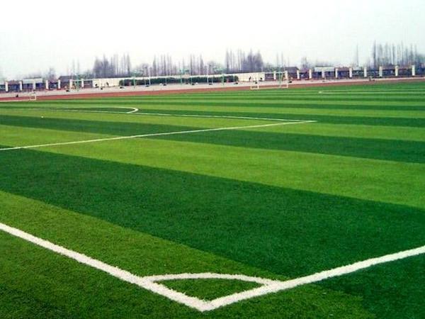 假草坪运动场地面图片